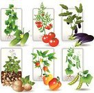 Tomato,Vegetable Garden,Plant,Formal Garden,Vegetable,Raw Potato,Green Pea,Cucumber,Pepper - Vegetable,Leaf,Vector,Eggplant,Crop,Agriculture,Healthy Eating,Plant Pod,Organic,Food,Sapling,Vitamin Pill,Nature,Dieting,Vegetarian Food,useful,Fruits And Vegetables,Food And Drink