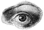 Engraving,Human Eye,Engraved Image,Old,Close-up,Obsolete,Eyesight,Looking,Eyelash,Watching,Isolated Objects,Eyebrow