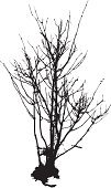 Bush,Bare Tree,Tree,Silhouette,Branch,Winter,Twig,Back Lit,Vector,Small,Isolated,Nature,Clip Art,Still Life,Isolated On White,Outline,Black Color,Stem,Illustrations And Vector Art,Copy Space,Season,Leaf,Ilustration,Nature,Concepts,Solitude,Painted Image,White Background,Full Length,Ideas,Tracing,Winter,Autumn,Art,Single Object