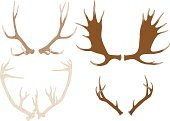 Antler,Horned,Vector,Drawing - Art Product,Pen And Ink,Wild Animals,Brown,Animals And Pets