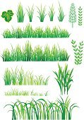 Grass,Nature,Environment,Growth,Herb,Organic,Stem,Leaf,Plant,Green Color,Set,Part Of,Nature,Illustrations And Vector Art