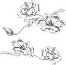 Flower,Single Flower,Magnolia,Floral Pattern,Drawing - Art Product,Retro Revival,Vector,Engraved Image,Branch,Ilustration,Woodcut,Blossom,Plant,White,Pencil Drawing,Leaf,Springtime,Isolated,Design Element,Ornate,Nature,Body,Bud,Clip Art,hand drawn,Elegance,Nature,Spring,Illustrations And Vector Art