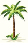 Palm Tree,Tree,Symbol,Coco Island,Vector,Leaf,Ilustration,Grass,Computer Graphic,Computer Icon,Illustrations And Vector Art,Nature,Vector Florals,Nucifera,Plants,Vector Icons,Abstract,Growth,Green Color,Nature,imagery