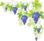 Grape,Vine,Leaf,Plant,Floral Pattern,Beauty,Design Element,Isolated,Decoration,Image,Isolated On White,Isolated Objects,Branch,Nature,Vector Florals,Backgrounds,Angle,Shape,Painted Image,Illustrations And Vector Art,Objects with Clipping Paths,Vector Ornaments,Beautiful,Ilustration,Curled Up,Swirl,Computer Graphic