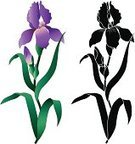 Iris,Flower,Stencil,Vector,Silhouette,Single Object,Purple,Clip Art,Black And White,Flower Head,No People,Back Lit,Color Image,White Background,Isolated On White,Colors,Cut Flowers,Stem,Plant,Illustrations And Vector Art,Flowers,Botany,Nature,Ilustration,Nature