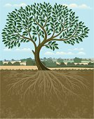 Tree,Root,Vector,Growth,Dirt,Leaf,Non-Urban Scene,Plant,Rural Scene,Landscape,Branch,Nature,Environment,Copy Space,No People