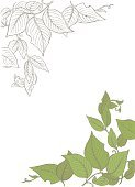 Vine,Green Color,Ilustration,Drawing - Art Product,Leaf,Simplicity,Hand-drawn,Black And White,Design Element