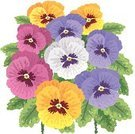 Pansy,Flower,Purple,Drawing - Art Product,Blue,Green Color,Hand-drawn,Nature,Flowers,Plant,Ilustration,Yellow,Nature,Leaf