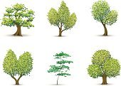 Tree,Symbol,Computer Icon,Forest,Treetop,Candid,Vector,Oak Tree,Icon Set,Tree Trunk,Environment,Leaf,Green Color,Bush,Ilustration,Sapling,Birch Tree,Nature,Pine Tree,Environmental Conservation,Coniferous Tree,Growth,Ornate,Plant,Evergreen Tree,Intricacy,Clip Art,Lush Foliage,Deciduous Tree,Nature,Nature Symbols/Metaphors,foliagé,Illustrations And Vector Art