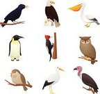 Owl,Pelican,Woodpecker,Penguin,Eagle - Bird,Bird,Symbol,Candid,Cardinal,Computer Icon,Vulture,Perching,Living Organism,Raven,Collection,Wood - Material,Branch,Animal,Animals In The Wild,Nature,Pets,Animal Themes,Birds Pictures,Animal Species,Wild Bird Pictures,Backyard Birds,Bird Picture,Pictures Of Birds,Bird Pictures,Flying,Types Of Animals,wild birds,Bird Species,Multiple Image,bird perch,wildlife animals,Picture Of Birds,Bird Identification,Animal Planet,Animal S,animal world,Bird Perching,Bird Images,Exotic Birds Pictures,Images Of Birds,Animal Images