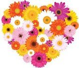 Heart Shape,Flower,Daisy,Gerbera Daisy,Gift,Pink Color,Multi Colored,Yellow,Orange Color,Cute,Chrysanthemum,Daisy Family,Vector,Plant,Purple,White,Flower Head,Love,Variation,Colors,Color Image,Magenta,Nature,Beauty In Nature,Isolated,Springtime,Beautiful,Red,Summer,Chamomile Plant,Chamomile,Greeting,Beauty,Valentine's Day - Holiday,Season,Petal,Romance,Freshness