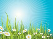 Idyllic,Outdoors,Meadow,Sunbeam,Sun,Grass,Backgrounds,Landscape,Sunlight,Sky,Day,Flower,Chamomile Plant,Chamomile,Spring,Nature Backgrounds,Summer,Springtime,Nature,Summer,Nature