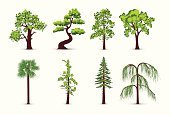 Tree,Pine Tree,Pine,Symbol,Hemlock Tree,Vector,Silhouette,Set,Forest,Leaf,Icon Set,Computer Graphic,Green Color,Plant,Growth,Branch,Ilustration,Collection,Environment,Shape,Beauty In Nature,Botany,Environmental Conservation,Design,Vector Icons,Image,Illustrations And Vector Art,Nature,Organic,Nature,Plants,Nature Symbols/Metaphors