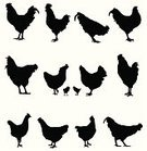 Chicken - Bird,Rooster,Silhouette,Cockerel,Animal,Poultry,Vector,Ilustration,Bird,Animal Themes,Black Color,Livestock,Profile View,Black And White,Animals Feeding,Image,Domestic Animals,Walking,Rear View,Moving Toward,Collection,Variation,Pecking,Design Element,Side View,Standing,Animals And Pets,Set,Large Group Of Animals,Full Length,Male Animal,Behind,Cut Out,Front View,White Background,Series,Female Animal,Birds,Mammal,Farm Animals,Isolated Objects,Barred Plymouth Rock Chicken,Group Of Animals,Isolated On White