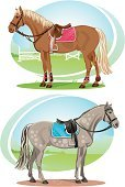Horse,Saddle,Horseback Riding,Vector,Riding,Side View,Standing,Show Jumping,Ilustration,Bridle,Drawing - Art Product,Sport,Color Image,Harness,Riding Tack,Riding Equipment,Stallion,Watercolor Painting