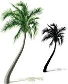 Palm Tree,Palm Leaf,Vector,Tropical Climate,Silhouette,Ilustration,Coconut Palm Tree,Shadow,Single Object,Tree Trunk,No People,White Background,Isolated Objects,Plants,Nature,Isolated On White,Green Color,Vertical,Illustrations And Vector Art