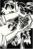 Vineyard,Picking,Grape,Winemaking,Vine,Leaf,Berry Fruit,Woodcut,Fruit,Human Hand,Grape Leaf,Ilustration,Vector,One Man Only,Red Grape,Bunch,Occupation,Grape-picker,Industry,People,Hedge Clippers,Food And Drink,Agriculture,Fruits And Vegetables,Plant,Agricultural Occupation,White,Black Color,Agriculture,Caucasian Ethnicity