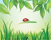 Grass,Ladybug,Dew,foliagé,Organic,Leaf,Biology,Insect,Plant,Raindrop,Beetle,Environment,Drop,Green Color,Season,Illustrations And Vector Art,Nature,Springtime,Summer,Healthy Lifestyle,Botany,Nature