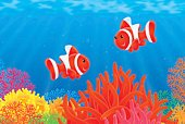Coral,Cartoon,Ilustration,Multi Colored,Red,Anemone Flower,Sea Life,Sea Anemone,Fish,Anemonefish,Sea,Animals In The Wild,Tropical Fish,Nature,Wildlife,Striped,Tropical Fresh Water Fish,Underwater,Tropical Climate,aquarium fish,Illustrations And Vector Art,Sea Life,Animals And Pets,Anemone-fish,coral fish,Animal
