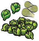 Brussels Sprout,Cabbage,Brussels,Vegetable,Vector,Symbol,Computer Icon,Freshness,Ilustration,Icon Set,Food,Healthy Lifestyle,Clip Art,Food And Drink,Illustrations And Vector Art,Set,Gourmet,Vegetarian Food,Green Color,Nature