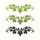 Ivy,Leaf,Flower,Silhouette,Green Color,Nature,Ilustration,Isolated,Decoration,Shape,Vector Ornaments,Vector Florals,Illustrations And Vector Art,Isolated On White