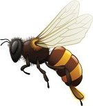 Bee,Wasp,Honey,Flying,Vector,Insect,Vector Icons,Insects,Illustrations And Vector Art,Animals And Pets,Shiny