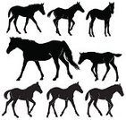 Horse,Foal,Silhouette,Mare,Walking,Livestock,Black Color,Vector,Motion,Baby Animals,Animals And Pets,Farm Animals