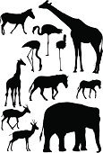 Giraffe,Animal,Elephant,Silhouette,Zebra,Zoo,Flamingo,Springbok,Vector,Animal Themes,Back Lit,Deer,Wildlife,Ilustration,Foal,Young Animal,jpg,Horse Family,Side View,Illustrations And Vector Art,Isolated On White