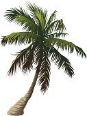 Palm Tree,Palm Leaf,Leaf,Tree,Vector,Ilustration,Tropical Climate,Nature,Nature,White Background,Illustrations And Vector Art