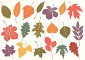 Leaf,Autumn,Leaf Vein,Chestnut Tree,Tree,Maple Tree,Ilustration,Vector,Oak Tree,Plant,Nature,Isolated Objects,Fall,Nature,Colors,Color Image,Illustrations And Vector Art