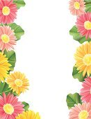 Gerbera Daisy,Frame,Daisy,Flower,Yellow,Ilustration,Nature,Flowers,Illustrations And Vector Art,Nature Backgrounds,Copy Space,Vector,Pink Color,Vertical,gradient mesh