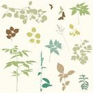 Plant,Leaf,Silhouette,Tree,Branch,Bush,Lime Tree,Butterfly - Insect,Summer,Hawthorn,Grass,Autumn,Springtime,Rowan Tree,Rowanberry,Ilustration,Nature,Collection,Set,Celandine