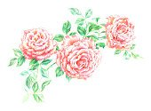 Rose - Flower,Flower,Pink Color,Paint,Retro Revival,Old-fashioned,Rosé,Drawing - Art Product,Bouquet,Isolated,English Rose,Summer,Antique Rose,Backgrounds,Pencil Drawing,Art,Softness,Cut Out,Blossom,Classic,Painted Image,Design Element,Branch,Plant,Close-up,Elegance,Flower Head,Style,Leaf,Hand-drawn,Beautiful,Composition,Arts And Entertainment,Beauty In Nature,Nature,Fragility,Stem,Horizontal,Image,No People,Color Image,Holidays And Celebrations,Flowers,White Background,Loving,Valentine's Day,Postcard,Isolated On White