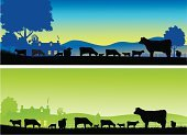 Farm,Cow,Silhouette,Landscape,Ranch,Cattle,Livestock,Barn,Dairy Cattle,Farmhouse,Panoramic,Beef Cattle,Sunrise - Dawn,Hill,Horizontal,Dawn,Morning,Agriculture,Industry,Landscapes,Sunlight,Animals And Pets,Nature,Farm Animals