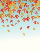 Falling,Leaf,Autumn,Forest,Illustrations And Vector Art,Nature,Plant,Yellow,Red,Nature
