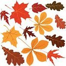 Leaf,Autumn,Tree,Vector,Chestnut,Symbol,Chestnut Tree,Oak Leaf,Ilustration,Maple Leaf,Thanksgiving,Season,Oak Tree,Backgrounds,Forest,Maple Tree,Abstract,Design,Red,Nature,Isolated,Plant,Computer Graphic,Art,Collection,Orange Color,Branch,Decoration,Set,Color Image,foliagé,Yellow,October,September,Chestnut Leaf,Illustrations And Vector Art,Vector Florals,Brown