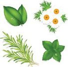 Rosemary,Mint Leaf - Culinary,Herb,Herbal Medicine,Leaf,Vector,Chamomile,Chamomile Plant,Alternative Therapy,Healthcare And Medicine,Freshness,Organic,Healthy Lifestyle,Green Color,Flower,Daisy,Grass,Close-up,No People,White,Yellow,Isolated On White,Backgrounds