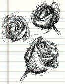 Rose - Flower,Sketch,Flower,Nature,Paper,Art,Computer Graphic,Drawing - Art Product,Line Art,Doodle,Modern,Abstract,Scribble,Design Element,Design,Vector,Ilustration,Cool,Swirl,Lined Paper,Backgrounds,Leaf,Blossom,Flower Head,Vector Florals,Stem,Illustrations And Vector Art,Clip Art,Isolated Objects,Petal,Pen And Marker,Copy Space,Funky,Flowers,Plant,Curled Up,Beauty In Nature,Nature,Style