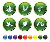 Aloe,Plant,Bamboo,Leaf,Computer Icon,Vector,Icon Set,Flower,Cactus,Nature,Circle,Digitally Generated Image,Modern,Blue,Bonsai Tree,Berry,Green Color,Orange Color,Ilustration,Black Color,Stem,Red,Design,Isolated On White,Branch,Yellow,White Background,Berry Fruit,Empty
