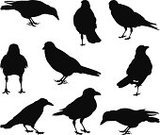 Crow,Raven,Silhouette,Bird,Halloween,Back Lit,Black Color,Animal,Vector,Drawing - Art Product,Black And White,Ilustration,Horror,Spooky,Pencil Drawing,Simplicity,Clip Art,Isolated,Dark,Drawing - Activity,Wildlife,Wing