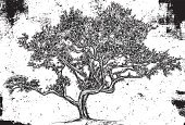 Tree,Oak Tree,Drawing - Art Product,Sketch,Dirty,Ilustration,Computer Graphic,Grunge,Abstract,Nature,Vector,Doodle,Line Art,Digitally Generated Image,Environment,Growth,Design,Funky,Environmental Conservation,Scribble,Weathered,Nature,Textured,Nature Backgrounds,Textured Effect,Illustrations And Vector Art,Scratched,Damaged,Cool,Nature Symbols/Metaphors,Copy Space,Pen And Marker