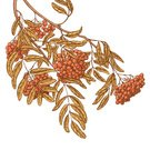 Leaf,Autumn,Rowan Tree,Rowanberry,Ilustration,Sketch,Branch,Berry Fruit,Yellow,Hatching,Orange Color,Vector,Vector Florals,Illustrations And Vector Art,Style,Ink,Decoration