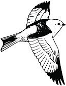Bird,Tattoo,Bird Watching,Freedom,Flying,Silhouette,Animal,Painted Image,Remote,Vector,Symbols Of Peace,Ilustration,Animals And Pets,Pigeon,Isolated,Birds,Dove - Bird,Image,Love,Wing