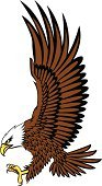 Eagle - Bird,Bald Eagle,Hawk - Bird,Vector,Flying,Wing,American Culture,Aggression,Animals In The Wild,White Background,Wildlife,Bird,Animal,Animals Hunting,Birds,Illustrations And Vector Art,Animals And Pets,Isolated