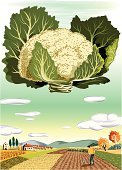 Vegetable,Cauliflower,Occupation,Landscape,Mediterranean Food,Farm,Green Color,Leaf Vegetable,Hill,Food,Computer Graphic,Scenics,Art Product,Ilustration,Vegetarian Food,Southern Food,Caucasian Ethnicity,Agriculture,Food And Drink,Fruits And Vegetables,Agriculture,Blue,White,Red,Yellow,Agricultural Occupation,Mature Men,Vector,Mid Adult Men,Men,Food Backgrounds,Pink Color,Brown,European Cuisine,Industry,Farmhouse,Black Hair,Black Color,Digitally Generated Image,Food Staple