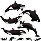 Killer Whale,Whale,Sea,Animal,Silhouette,Diving,San Diego Sea World,Underwater Diving,Vector,Back Lit,Jumping,Diving,Mammal,Isolated,White Background,Black And White,White,Mascot,Sea Life,Computer Graphic,Black Color,Ilustration,Animal Mouth,Tail Fin,Mouth Open,Close-up,Swimming Animal,Digitally Generated Image,graphic element,water animal,Animal Backgrounds,Clip Art,Sea Life,Group Of Animals,Animal Fin,Vector Ornaments,Group of Objects,Pacific Northwest,Illustrations And Vector Art,Design Element,Vector Graphics,Aquatic Mammal,Isolated On White,Animals And Pets