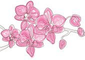 Orchid,Flower,Pink Color,Lily,Vector,Twig,Ilustration,Springtime,Single Object,Botany,Flower Head,Plant,Scented,Nature,Painted Image,Blossom,Summer,Petal,Flowers,Summer,Vector Florals,Nature,Bud,Blooming,Illustrations And Vector Art