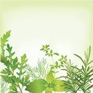 Herb,Herbal Medicine,Basil,Arugula,Rosemary,Freshness,Oregano,Parsley,Leaf,Marjoram,Green Color,Dill,Frame,Italian Culture,Ingredient,Blackboard,Springtime,Decoration,Food,French Culture,Design,Vegetarian Food,Summer,Vector Backgrounds,Dieting,Isolated,Food And Drink,Fruits And Vegetables,Food Backgrounds,Ilustration,Twig,Dill Sauce,Collection,Illustrations And Vector Art