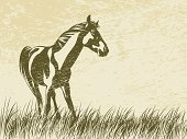Horse,Farm,Animal,Silhouette,Animals In The Wild,Pasture,Sketch,Vector,Ilustration,Grass,Landscape,Uncultivated,Outline,Nature,Wind,Image,Livestock,Stallion,Strength,Wildlife,Mane,Shape,Animal Muscle,Scenics,Composition,Mammal,Landscaped,Wildflower,Male Animal,Drawing - Art Product,Ecosystem