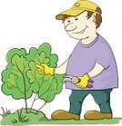 Gardening,Cutting,Vector,Bush,Pruning Shears,Pruning,Cartoon,Tree,Male,Working,Cap,Environment,Agriculture,Isolated,People,Botany,Summer,People,Men,Manual Worker,Plant,Gardening Equipment,Nature,Gardens,Branch,Occupation,Nature,Rural Scene,Outdoors,Industry